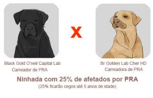 capital lab