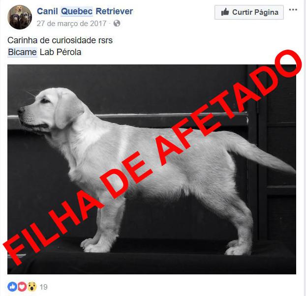 Model alexa dating pitbull lab