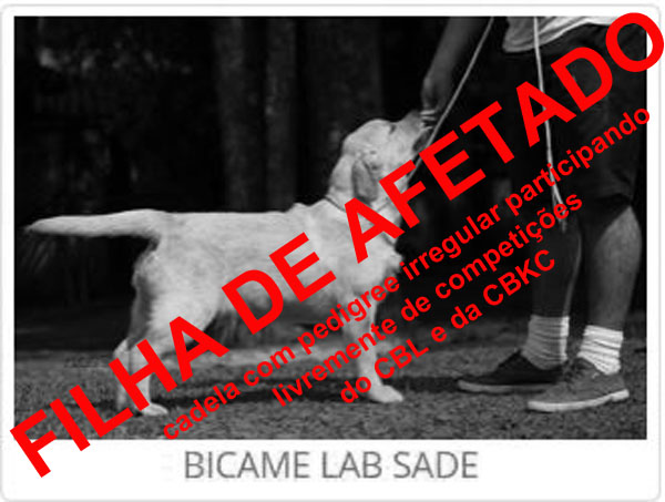 Bicame Lab Sade - MJ