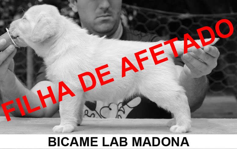 bl-madona---mj