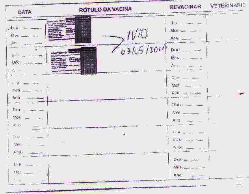 4. Vacinação 2